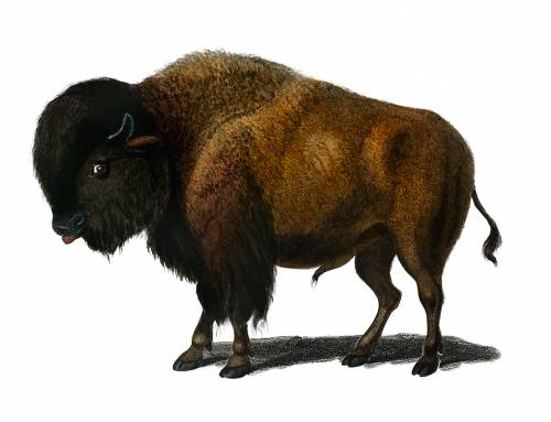 Buffelmarathon