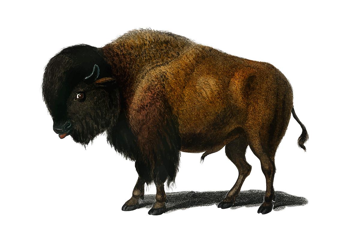 Buffelmarathons